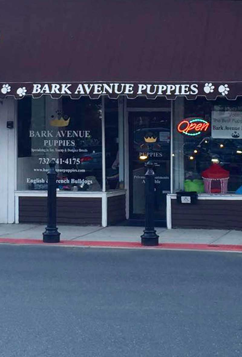 Bark Avenue Puppies - 4 West Front Street, Red Bank, NJ